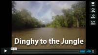 Jungle Video